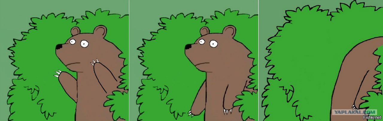 Медведь шлюхам