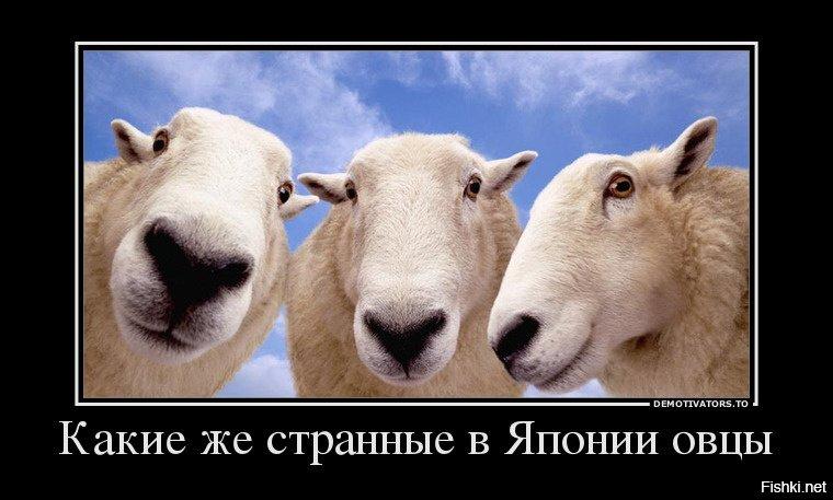 демотиваторы про овец диалоговом