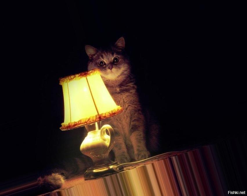 настало время офигительных историй кот картинка том, что