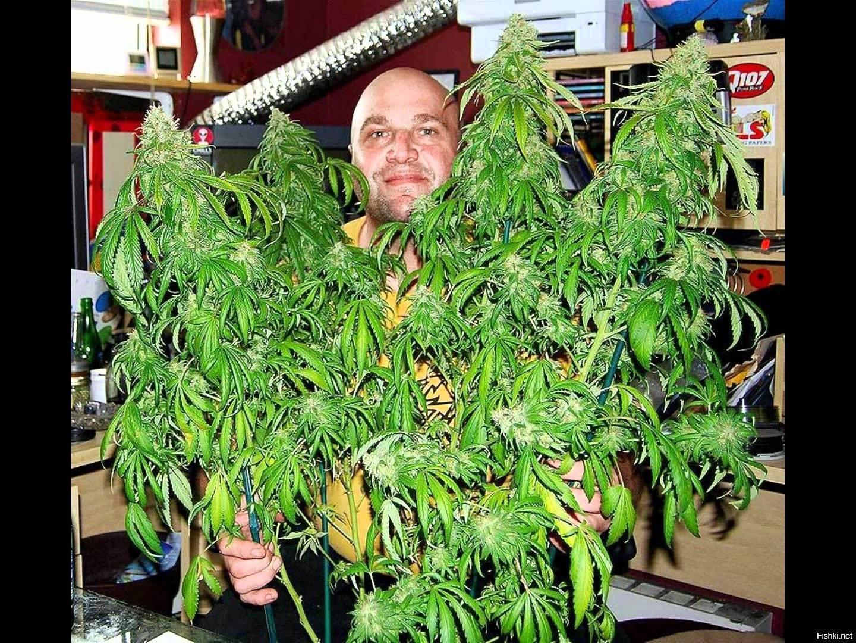 Сортов конопли сколько марихуаны сорта