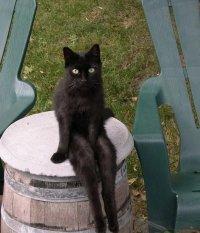 Коты , еще и не на такое способны: