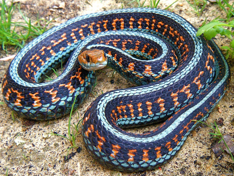 Все виды змей фото с названиями
