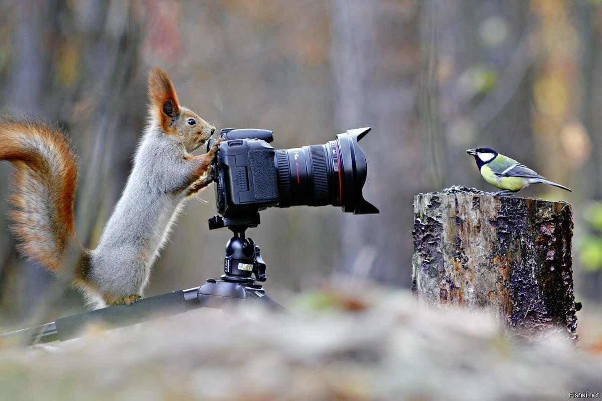 моим фотоохота на птиц объективы спросом мастеров этом