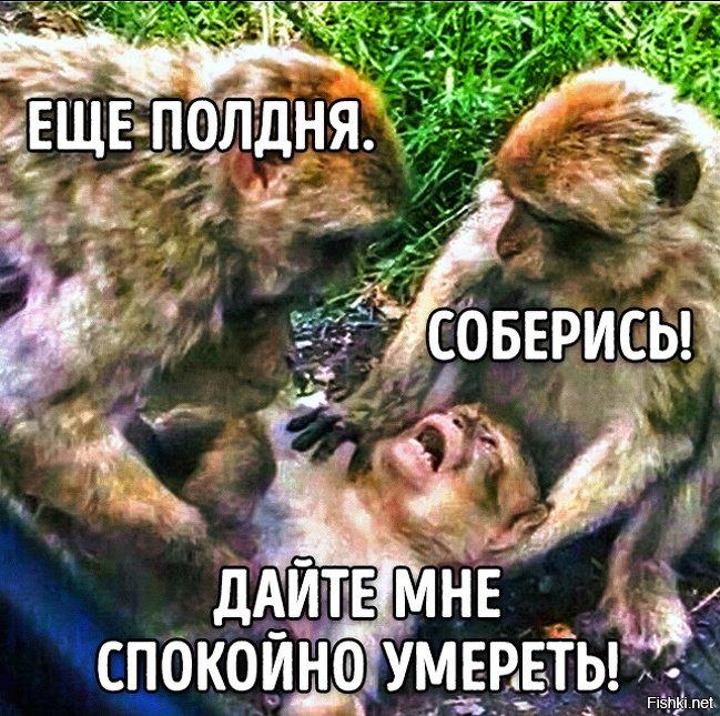 картинка с тремя обезьянами мем отделке душа