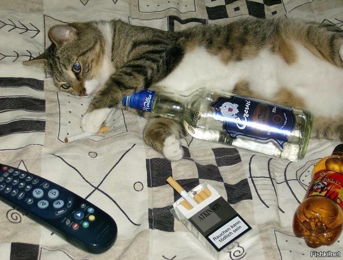 Картинки, картинки смешные пьяный кот