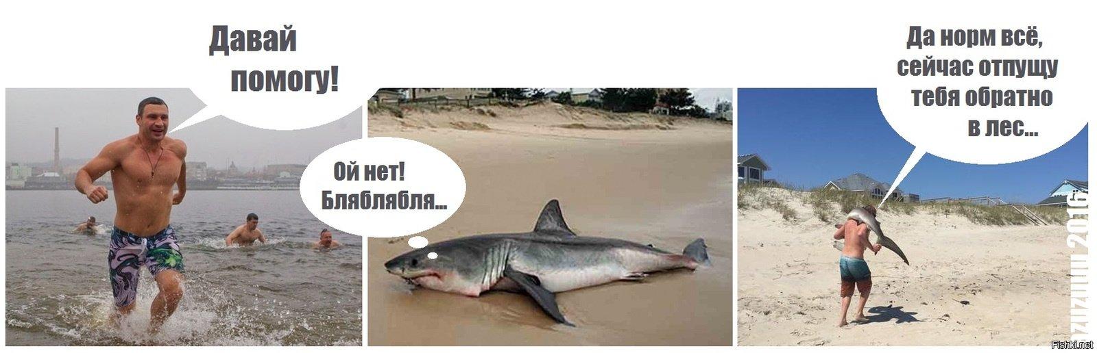 картинка кличко и акула всей
