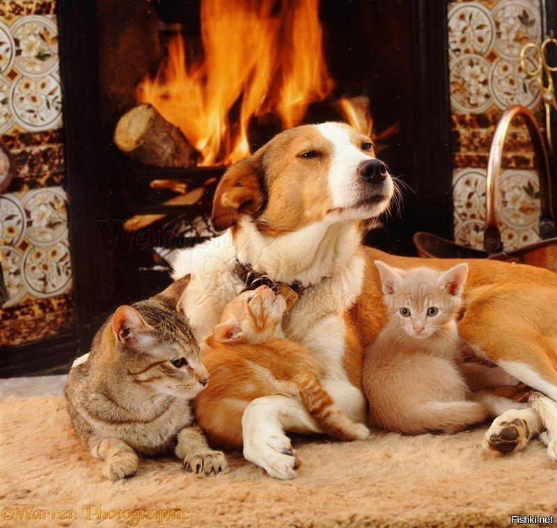 Картинки много кошек и собака
