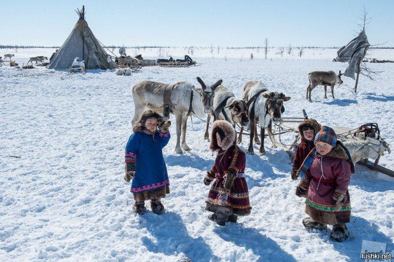 Картинки жители севера для детей