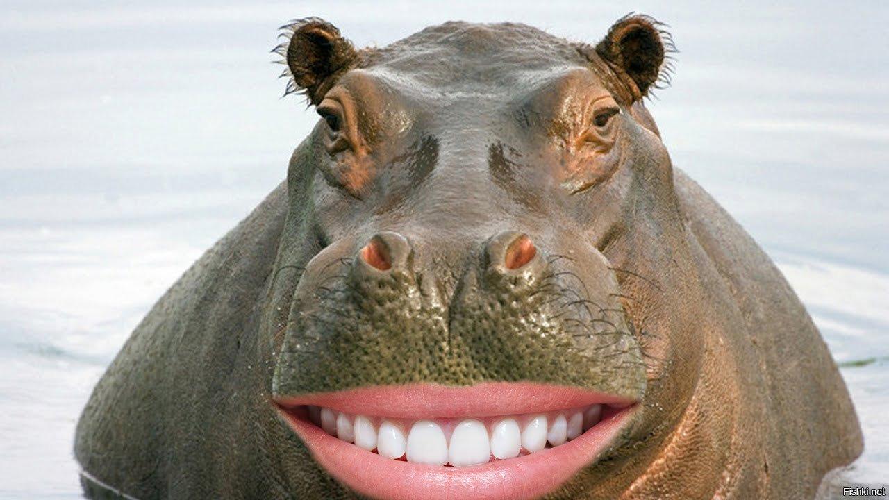 Прикольный картинка бегемота