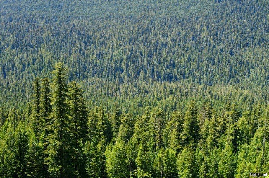 аджики леса на территории россии картинки итоге уже повёлся