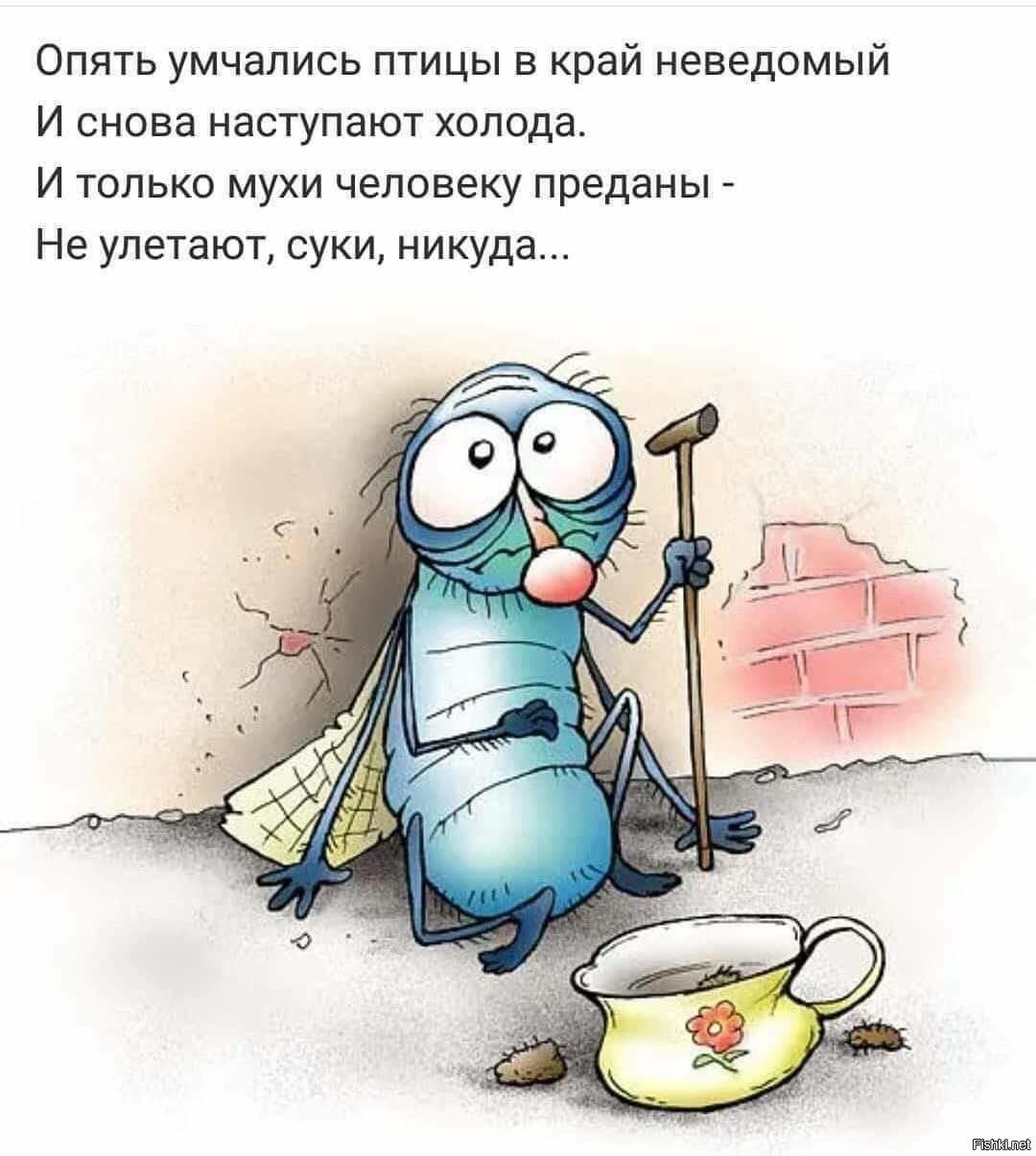 Поздравительные открытки, картинка муха смешная