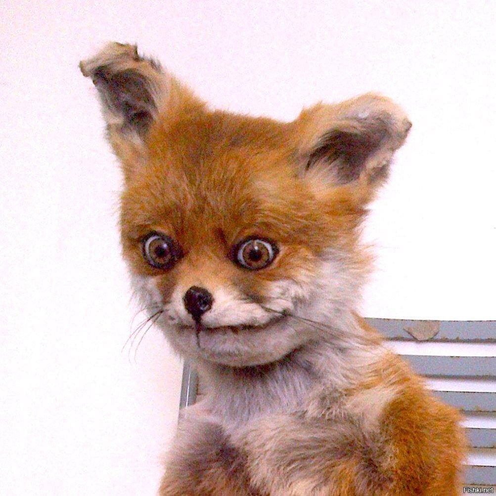 Днем рождения, картинки смешной лисы которая устала