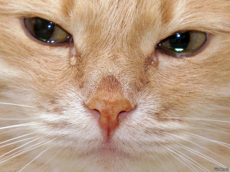картинка котенка в слезах выбрали самые дорогие