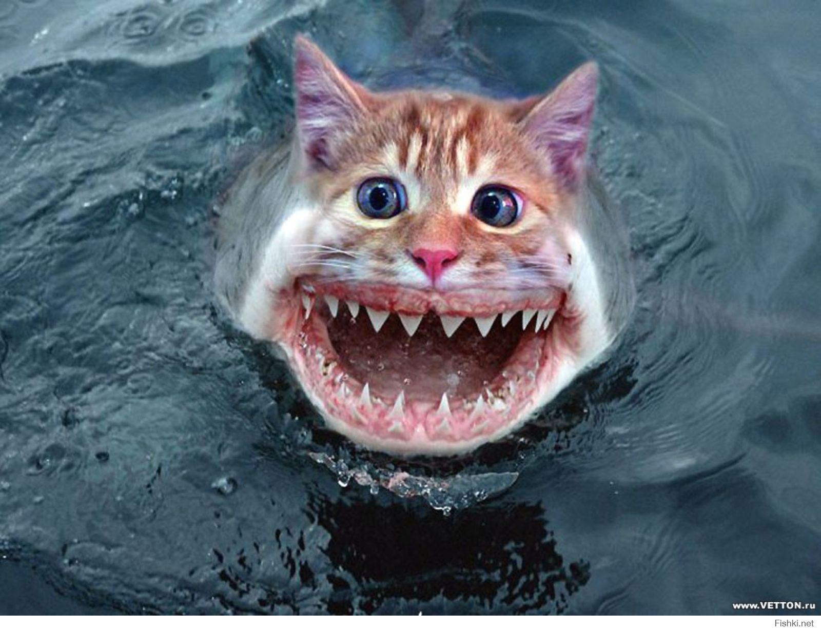 картинка акула бесите самостоятельного