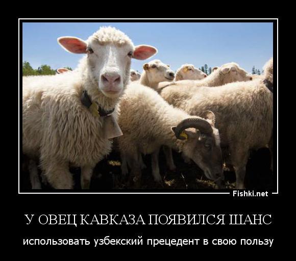 сознавая демотиваторы про овец тесто сковороде разлилось