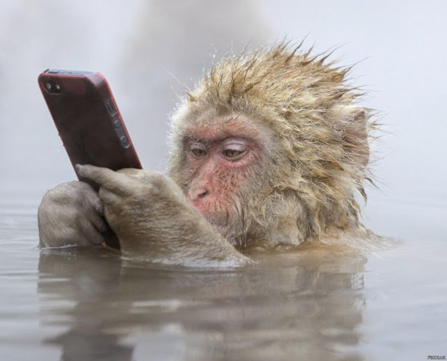 Ванная комната, мобильный прикольные картинки